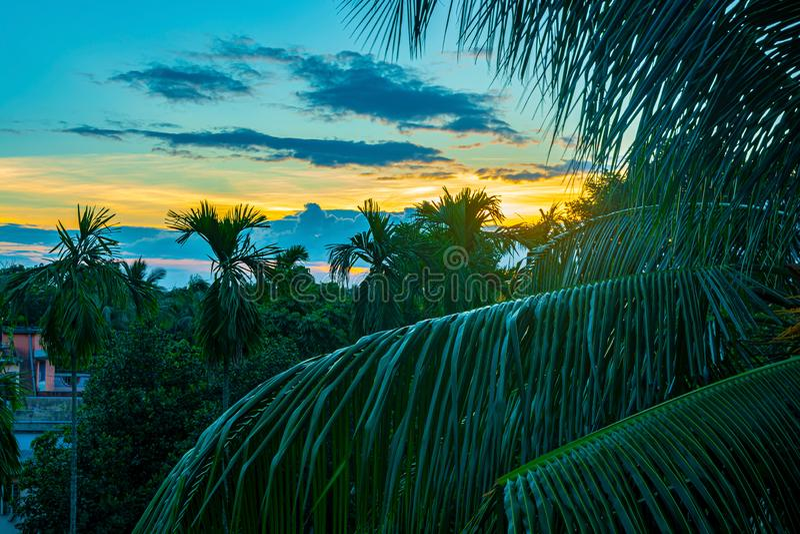 Hermosa vista del cielo de la puesta del sol detrás de las palmeras foto de archivo libre de regalías