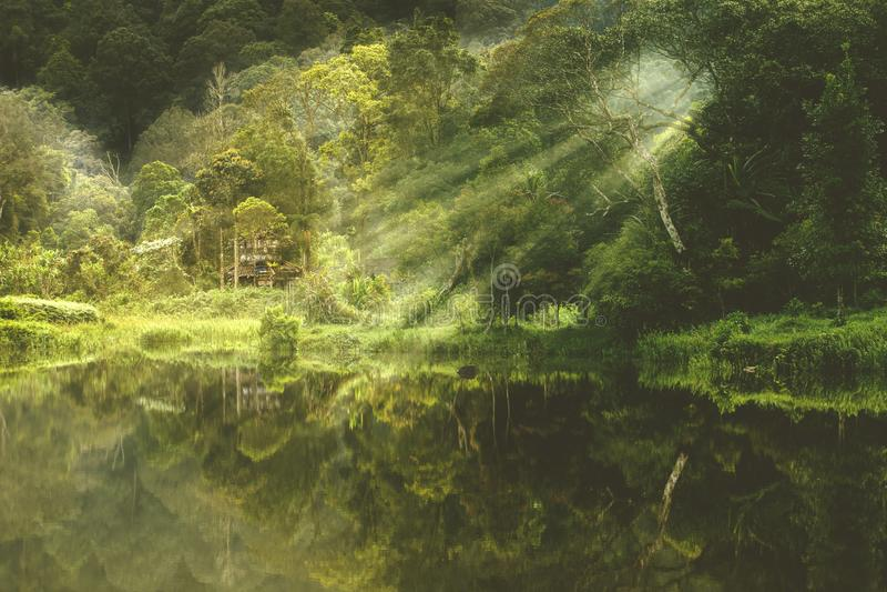 Hermosa vista del lago del bosque en mañana brumosa fotografía de archivo libre de regalías