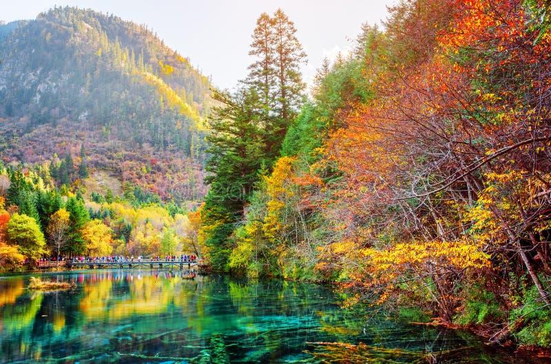 Hermosa vista del lago cinco flower entre el bosque escénico de la caída fotografía de archivo libre de regalías