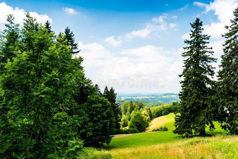 Hermosa vista del paisaje del verano foto de archivo