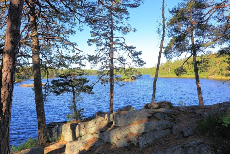 Hermosa vista en el lago a través de árboles altos verdes en un top de rocas Fondos magníficos del paisaje de la naturaleza sueci imágenes de archivo libres de regalías