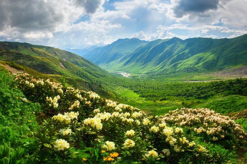 Hermosa vista en el valle verde de la montaña en luz del sol en Svaneti, Georgia imagen de archivo libre de regalías