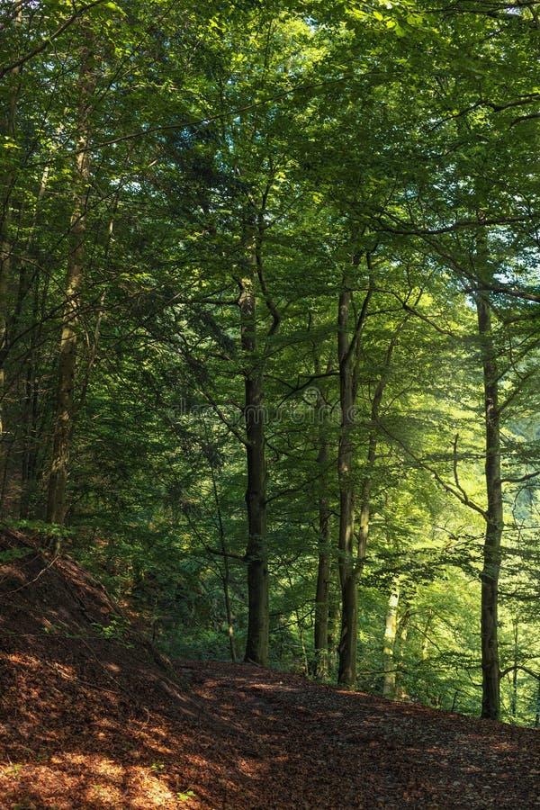 Hermosa vista en los bosques de la montaña del bosque negro fotos de archivo libres de regalías