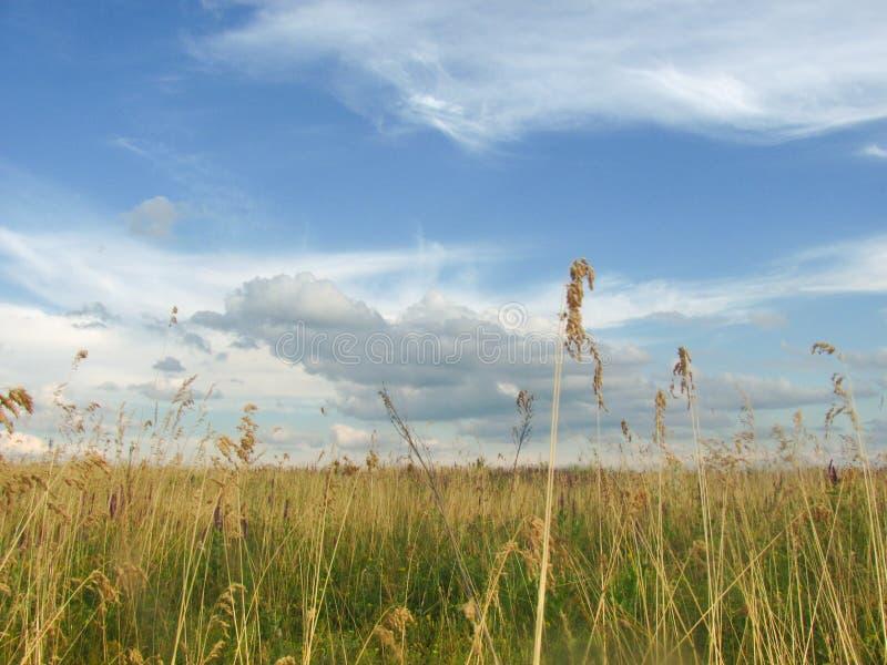 Hermosa vista en prado de la hierba y el cielo escénico fotografía de archivo