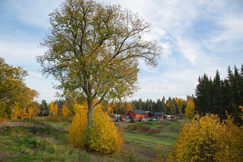 Hermosa vista sobre el pueblo del país rodeado de árboles y de campo de hierba amarillos verdes fotografía de archivo libre de regalías