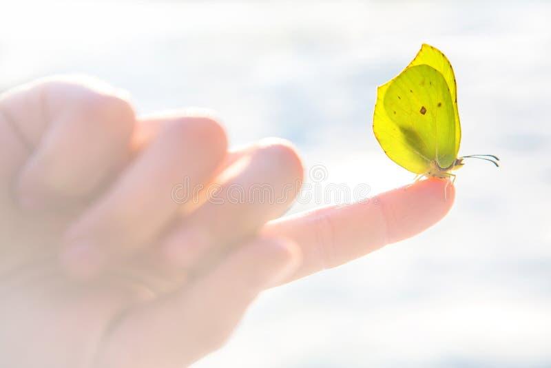 Hermoso amarillo mariposa la palma de un niño con el fondo blanco borroso de la nieve fotografía de archivo libre de regalías