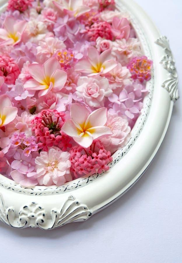 Hermoso de flores rosadas en marcos del vintage fotografía de archivo