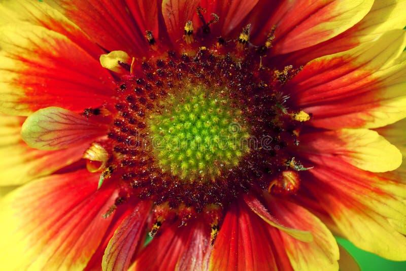 Hermoso escoja la flor aislada del jardín abstraiga el fondo Espacio en el fondo para la copia, texto, sus palabras foto de archivo