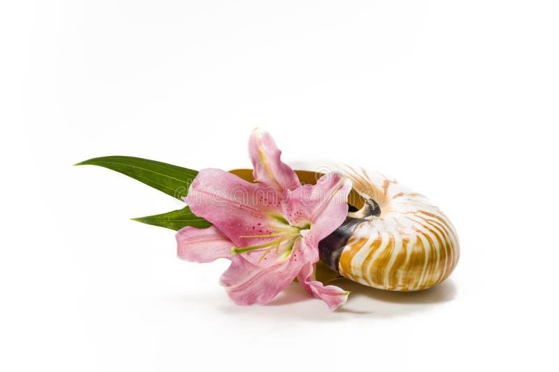 Hermoso, flor del lirio imágenes de archivo libres de regalías