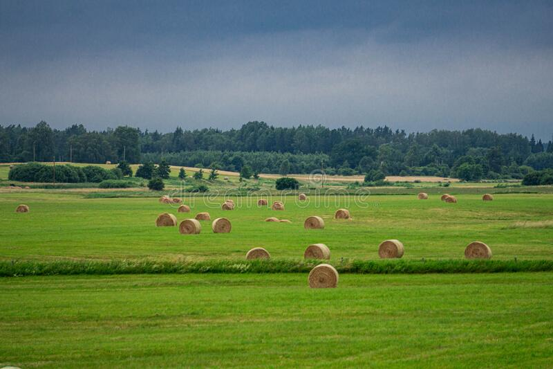 Hermoso paisaje de un campo con rollos de césped cortado y un oscuro cielo tormentoso en Letonia en verano fotos de archivo