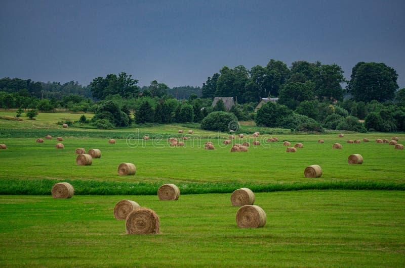 Hermoso paisaje de un campo con rollos de césped cortado y un oscuro cielo tormentoso en Letonia en verano fotografía de archivo