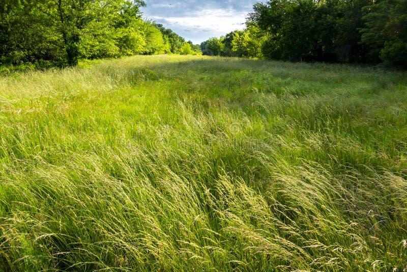 Hermoso y tranquilo paisaje de pradera en el centro de Kansas foto de archivo