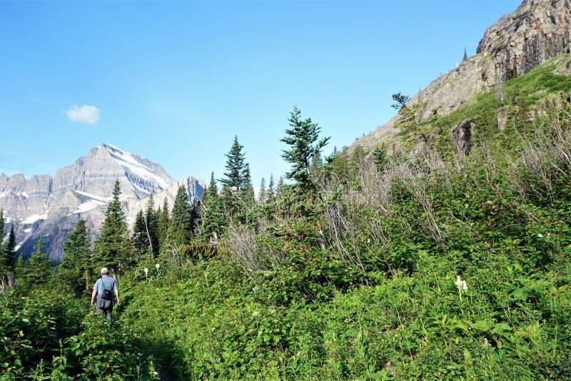 Hernieuwde groei van oude bosbranden in Gletsjer Nationaal Park royalty-vrije stock afbeeldingen