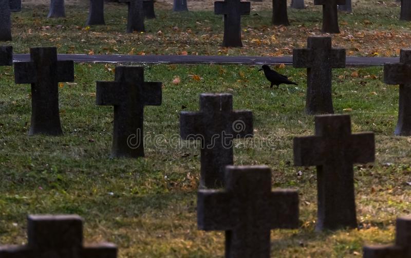 Heroes Cemetery Pro Patria. Bucharest, Romania - November 11, 2018: A crow walks among the crosses of soldiers killed in World War I are seen in the Heroes stock photography