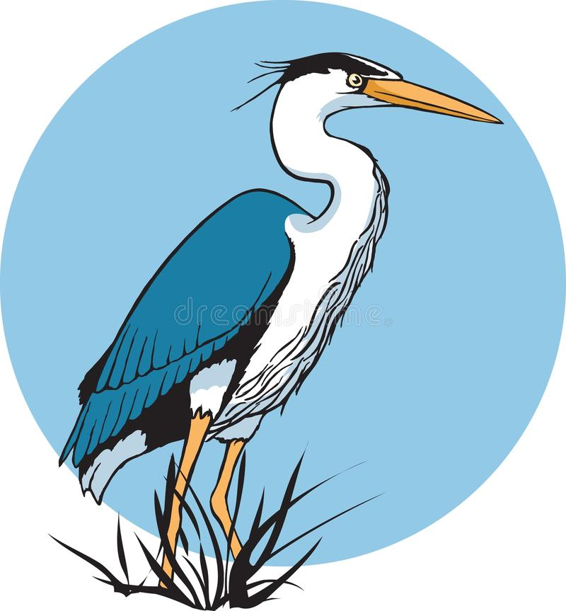 Heron. A Blue Heron wading in a marsh. Vector and high resolution jpeg files available. As always, thank you for your time