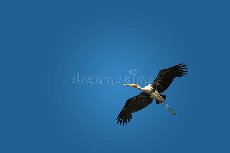 Download Heron stock image. Image of wings, tall, bird, walking - 17501609