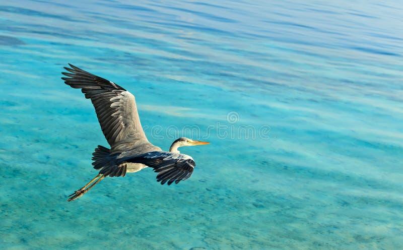 Download Heron stock image. Image of claws, nature, beak, silhouette - 28694925