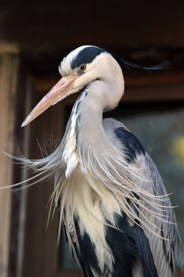 Free Heron Stock Photos - 675183