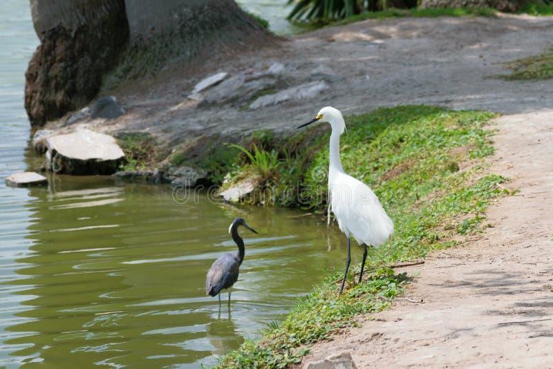Heron bij een meer stock afbeelding