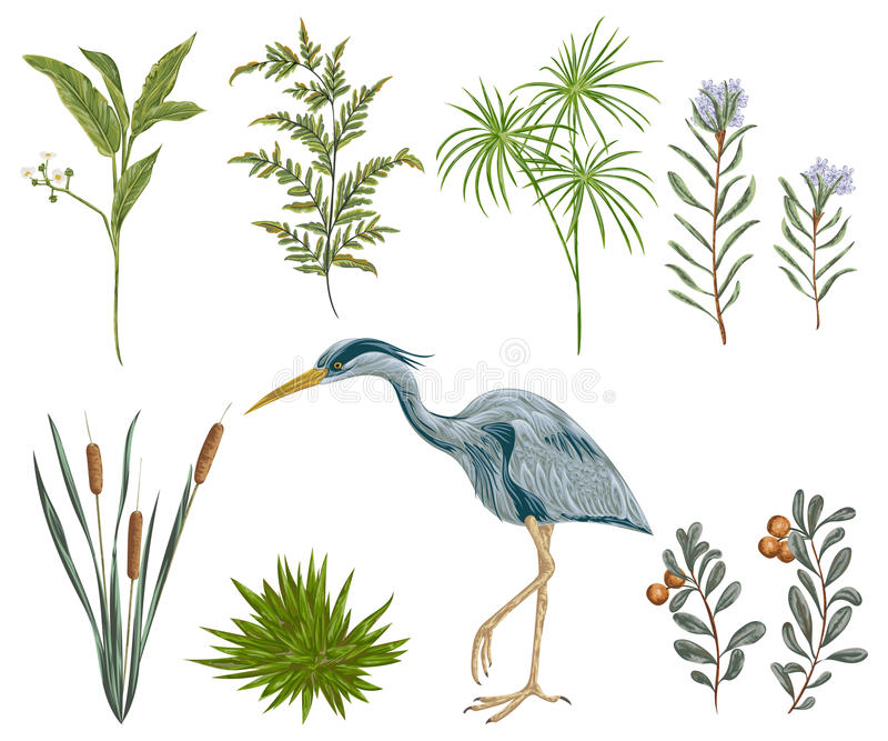 Heron bird and swamp plants. Marsh flora and fauna. Isolated elements Vintage hand drawn vector illustration in watercolor style stock illustration