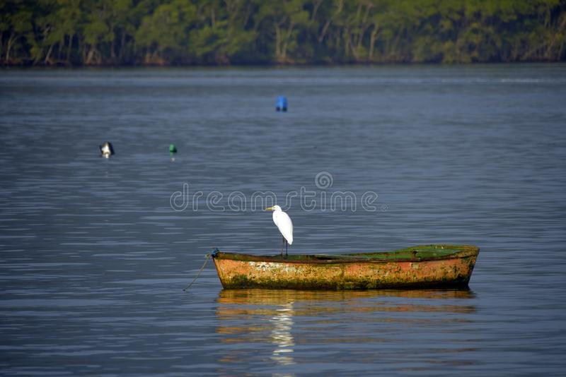 Heron on boat, in calm waters of the sea. Bertioga city, Sao Paulo state, Brazil stock photography
