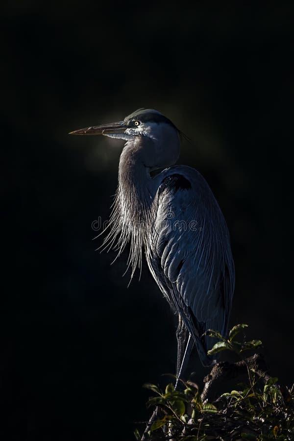 A heron stock photos