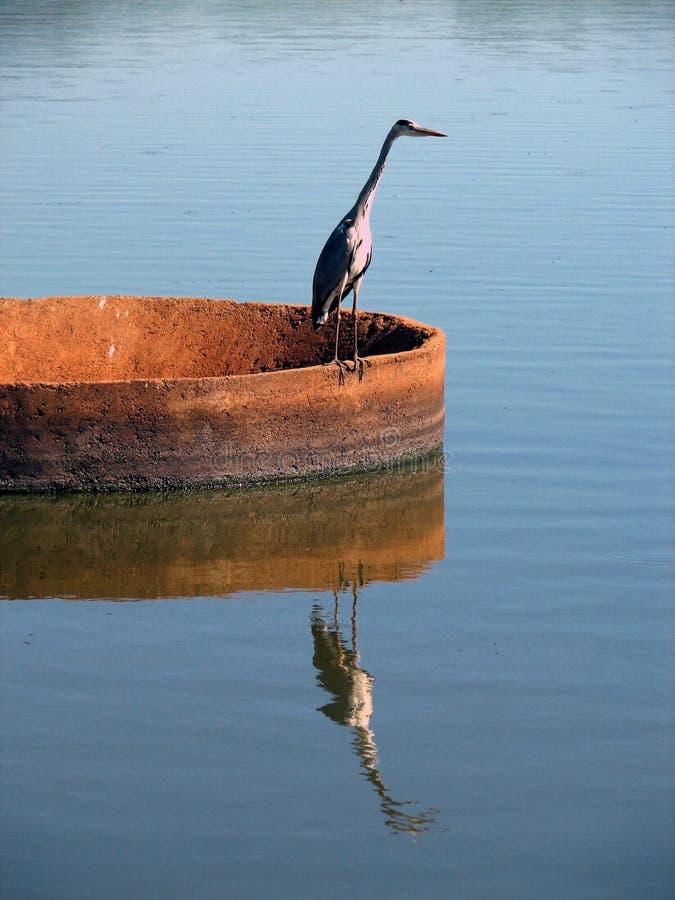 heron grobelny odbicia fotografia royalty free