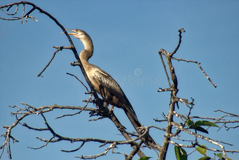 Heron huatulco oaxaca. Algae, america, animals, bird, watching, blue, camping, catching, colorful, dragonflies, ecosystem, everglades, flight, florida, flying stock images