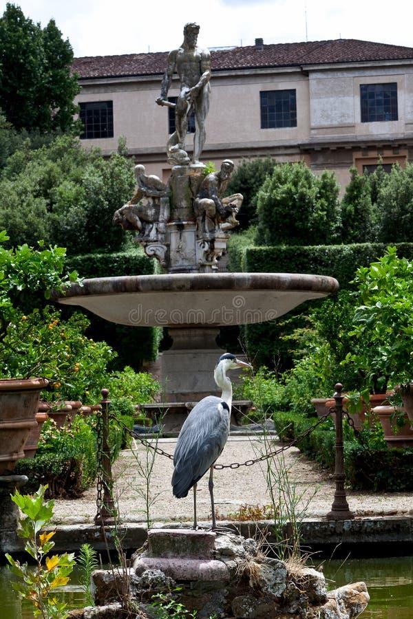 Heron Isolotto`s Basin Ocean, Boboli Gardensi, Florence, Italy. The Isolotto`s Basin Ocean by Giambologna at Boboli Gardens, Florence - Firenze, Italy Italia stock photos