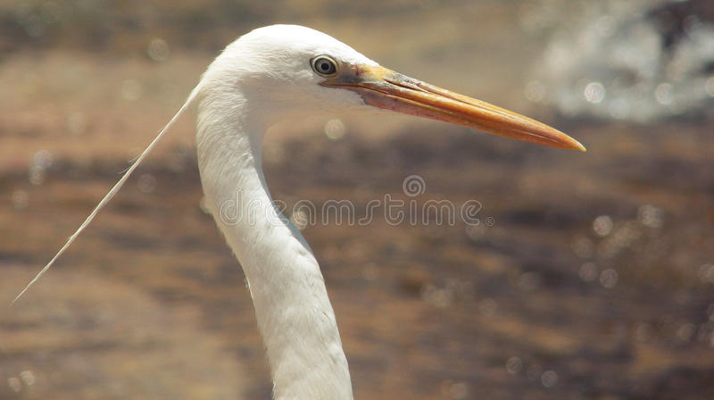 Heron's Hairstyling royalty free stock photo