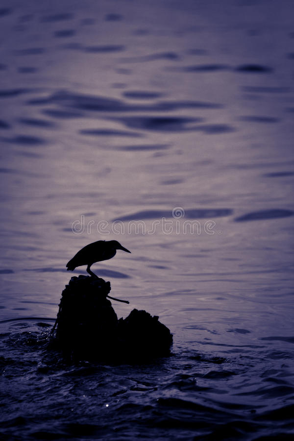 Heron Silhouette Royalty Free Stock Photo