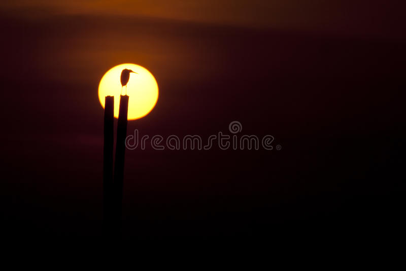 Download Heron Silhouette stock photo. Image of scenics, sunbeam - 18698366