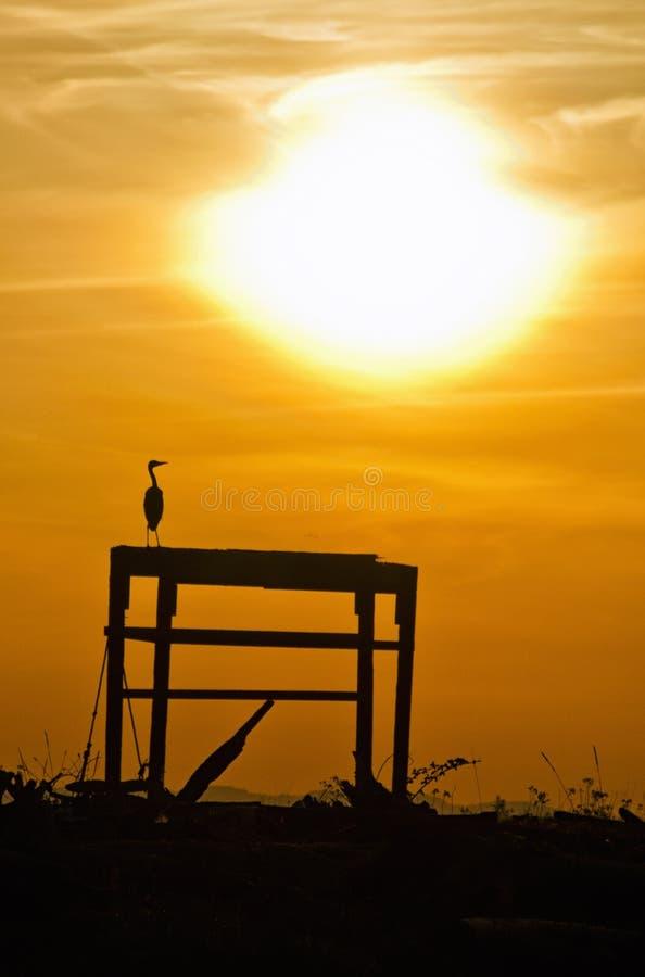 Heron Silhouette stock photography