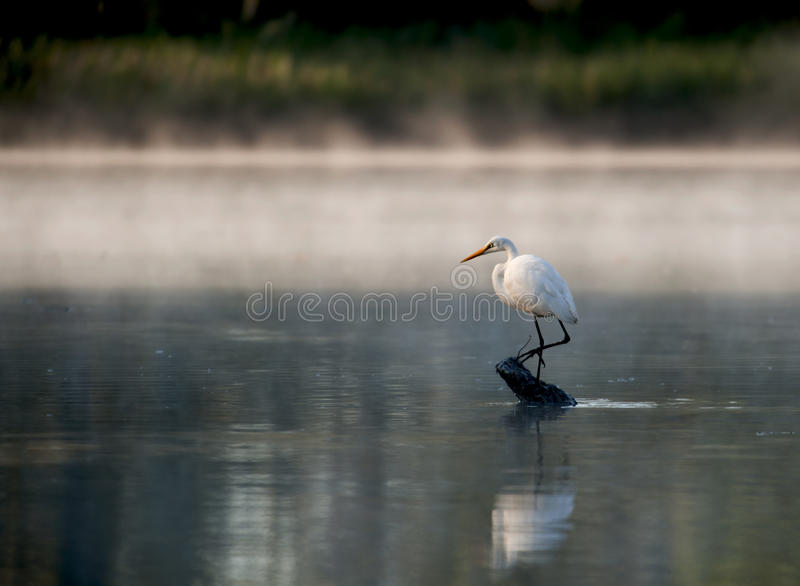 Download Heron Standing On A Log In The River. Stock Photo - Image: 17484944