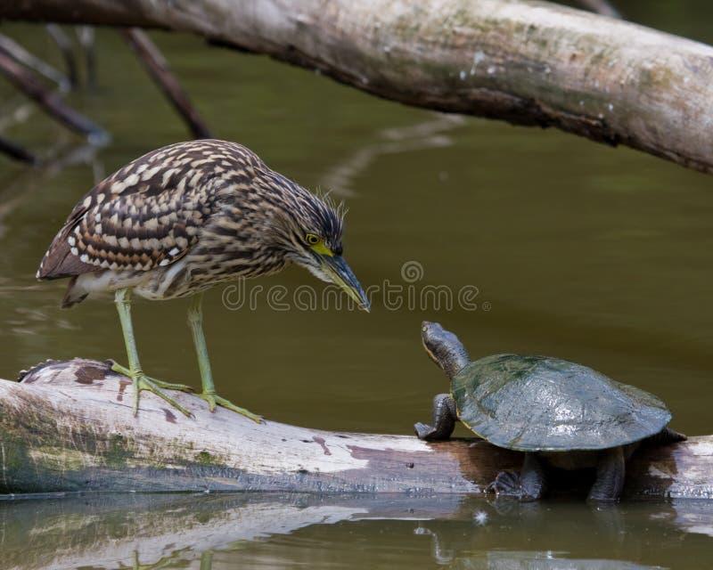 Heron vs Turtle