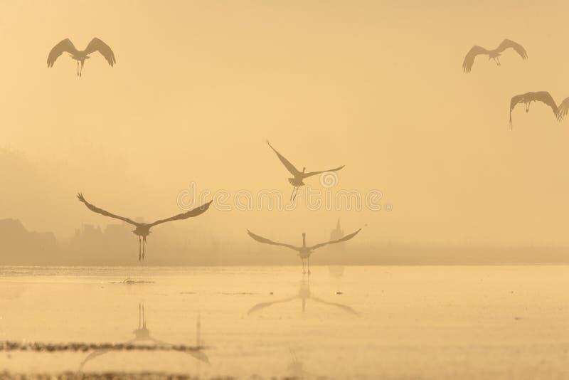 herons fotos de archivo libres de regalías