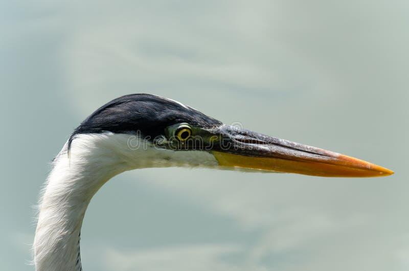 herons fotografía de archivo libre de regalías