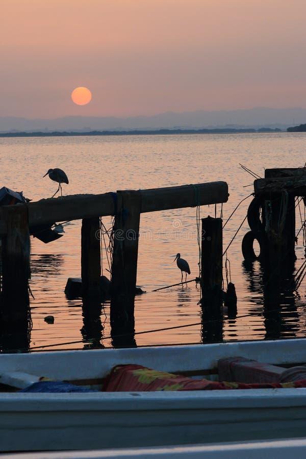 Free Herons And Sunrise Royalty Free Stock Image - 49224486