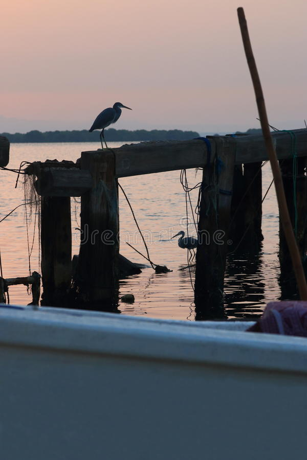 Herons on old pier. The sunrise over the water area of the harbor of the Persian Gulf in the old town area. Grey heron standing on the beam destroyed the wooden royalty free stock image