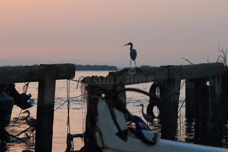 Herons on old pier. The sunrise over the water area of the harbor of the Persian Gulf in the old town area. Grey heron standing on the beam destroyed the wooden stock photography