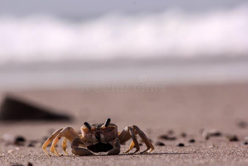 Herr Krabbe? lizenzfreie stockfotografie