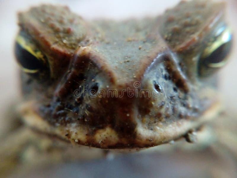 Herr Toad royaltyfri fotografi