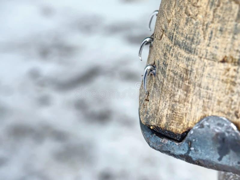 Herrador que arregla los clavos de acero y seguro en el enganche del caballo imágenes de archivo libres de regalías