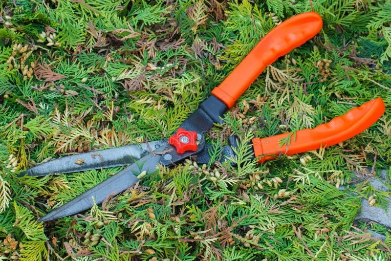 Arreglar jardin arreglar jardn diseo jardines exterior - Arreglar jardin abandonado ...