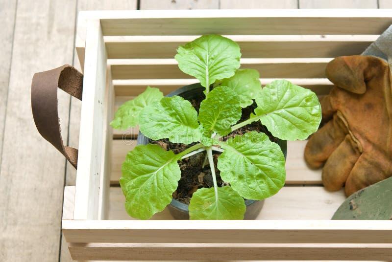 Herramientas que cultivan un huerto en cajón de madera imagen de archivo libre de regalías