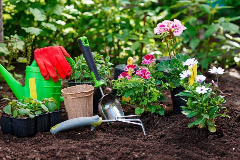 Herramientas que cultivan un huerto y plantas en fondo del suelo El jard?n de la primavera trabaja concepto imágenes de archivo libres de regalías