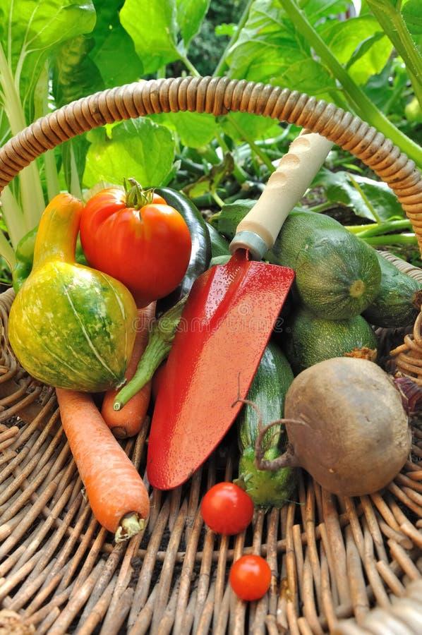 Herramientas y verduras en cesta imágenes de archivo libres de regalías