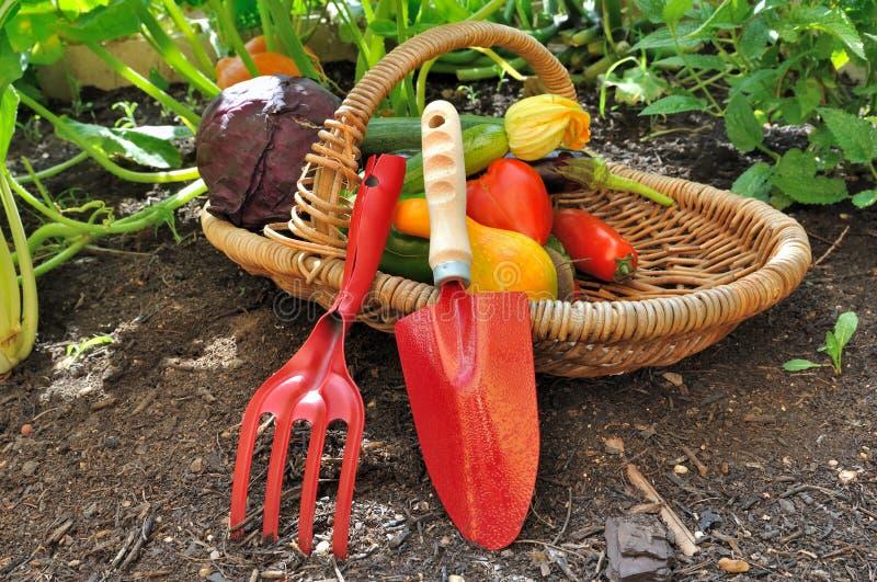 Herramientas y verduras en cesta imagen de archivo libre de regalías