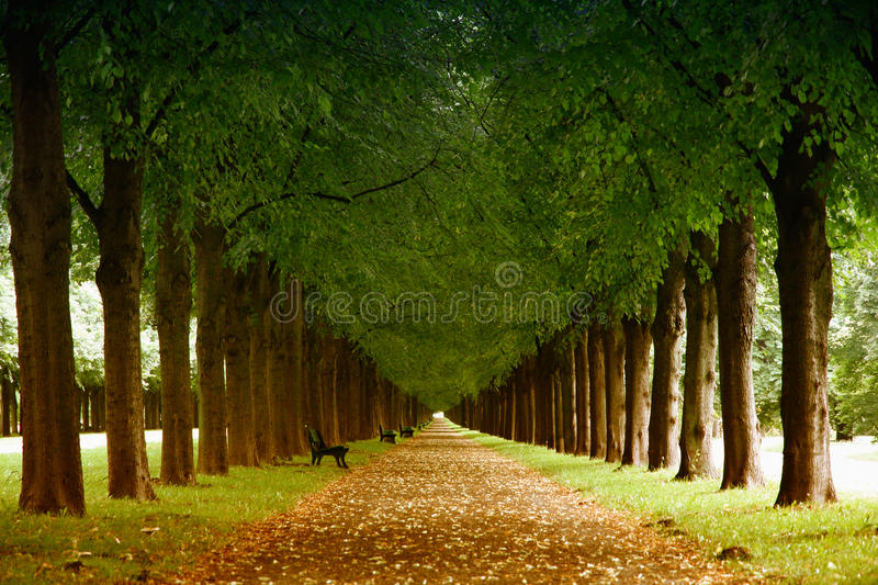 Herrenhauser Allee in Hannover, Germany. Autumn landscape, Herrenhauser Allee in Hannover, Germany royalty free stock photography