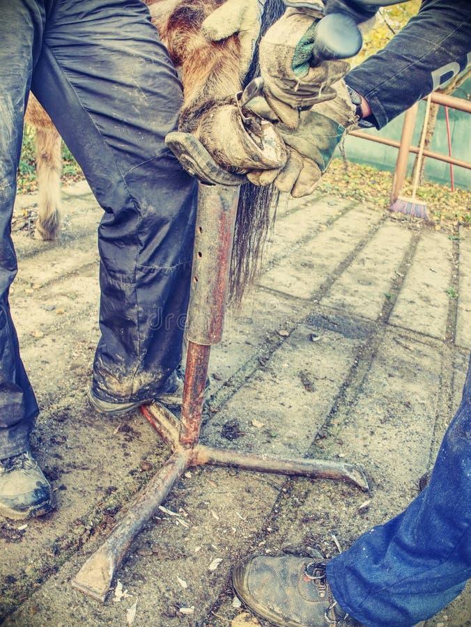 Herrero modificar el enganche gastado y demasiado grande para su edad del caballo foto de archivo libre de regalías